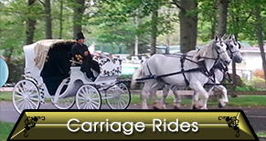White Carriage  - Horse Rides